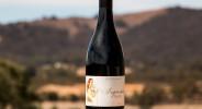 Wines-syrah14